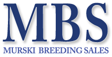 Murski-Breeding Sales
